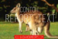 Contoh Report Text dan Terjemahannya: Kangaroo (Kanguru)
