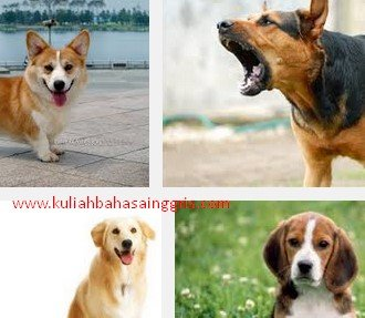 Definisi + Contoh Report Text About Dog Beserta Terjemahannya Terbaru