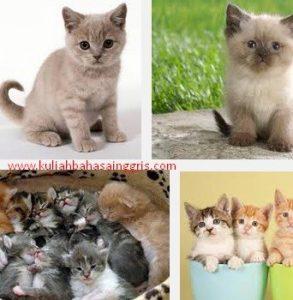 Contoh Descriptive Text About Cat Beserta Artinya