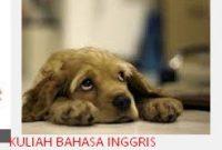 Cerita Fabel Dalam Bahasa Inggris Terbaik : Anjing Yang Malang
