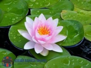 Kosa Kata Nama Bunga dalam Bahasa Inggris Beserta Artinya Lengkap