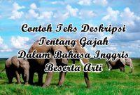 Contoh Descriptive Text Animal Tentang Hewan (Gajah) Dalam Bahasa Inggris Beserta Artinya