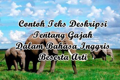 Contoh Descriptive Text Animal Tentang Hewan Gajah Dalam