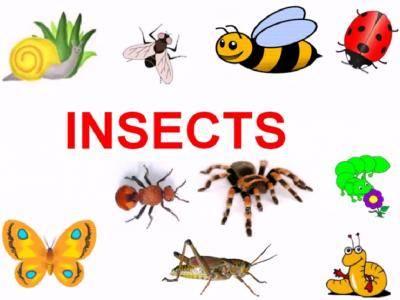 Kumpulan Kosakata Serangga Bahasa Inggris Paling Lengkap dari A-Z