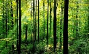 """Perbedaan Dan Contoh Kalimat """"Forest vs Jungle vs Woods"""" Dalam Bahasa Inggris"""