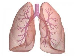 """Perbedaan Dan Contoh Lengkap """"Breath vs Breathe"""" Dalam Bahasa Inggris"""