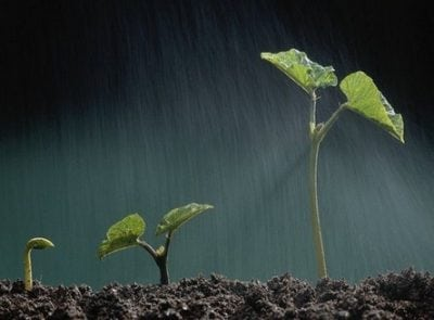 """Perbedaan Dan Contoh """"Grow, Grew, Grown, Growing"""" Dalam Bahasa Inggris"""
