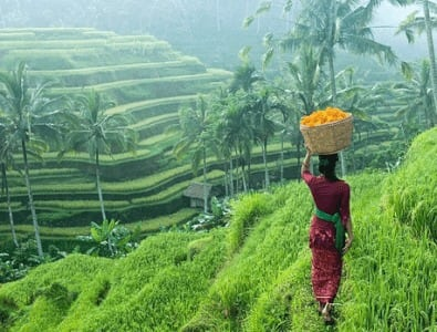 Menceritakan Keindahan Ubud Bali Dalam Bahasa Inggris