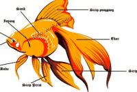 30 Kosakata Bagian Tubuh Hewan Dalam Bahasa Inggris Beserta Artinya