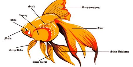 30 Kosakata Bagian Tubuh Hewan Dalam Bahasa Inggris Beserta dengan Arti Lengkap