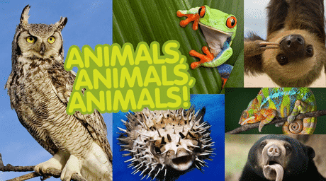 Kumpulan Nama Binatang Dan Suaranya (Animal and Their Sounds) Dalam Bahasa Inggris