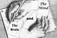 """""""Mind vs Brain"""" : Apa bedanya? Penjelasan Dan Contohnya Dalam Bahasa Inggris"""
