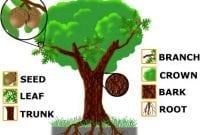 """Macam Macam """"Part of Tree"""" Dalam Bahasa Inggris Beserta Artinya"""