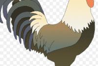 Kumpulan Ungkapan Bahasa Inggris Berhubungan Dengan Ayam Beserta Artinya