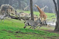 Contoh Percakapan Di Kebun Binatang (Zoo) Dalam Bahasa Inggris