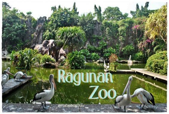 Hasil gambar untuk Ragunan Zoo